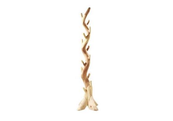 Καλόγερος ρούχων δέντρο από μασίφ κορμό τροπικού δέντρου J-310067